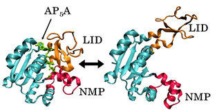 Proteins: Structure, Dynamics, and Function